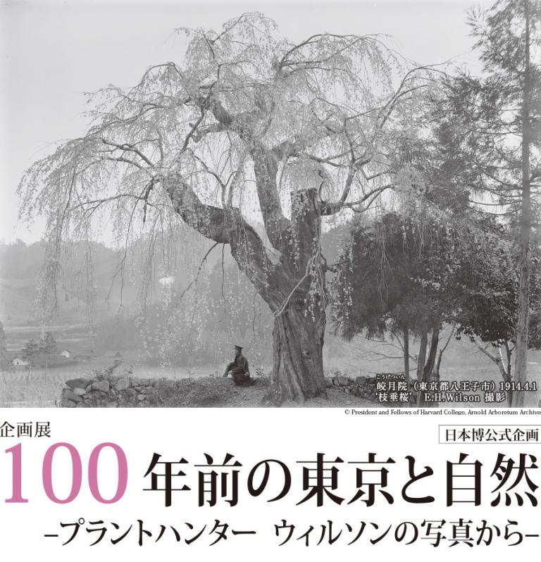 100年前の東京と自然