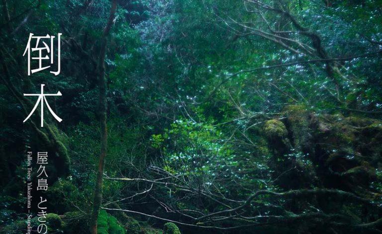 写真集「倒木」
