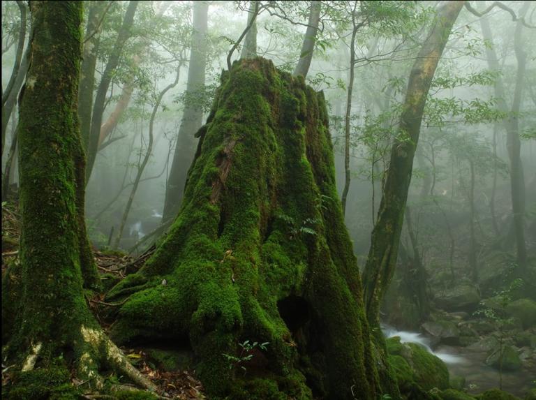「屋久島 千年の奇跡」堀江重郎写真展